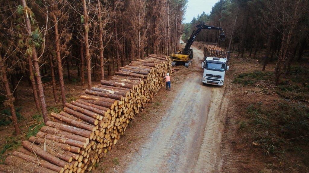 Fotos Timber Rio Negrinho47
