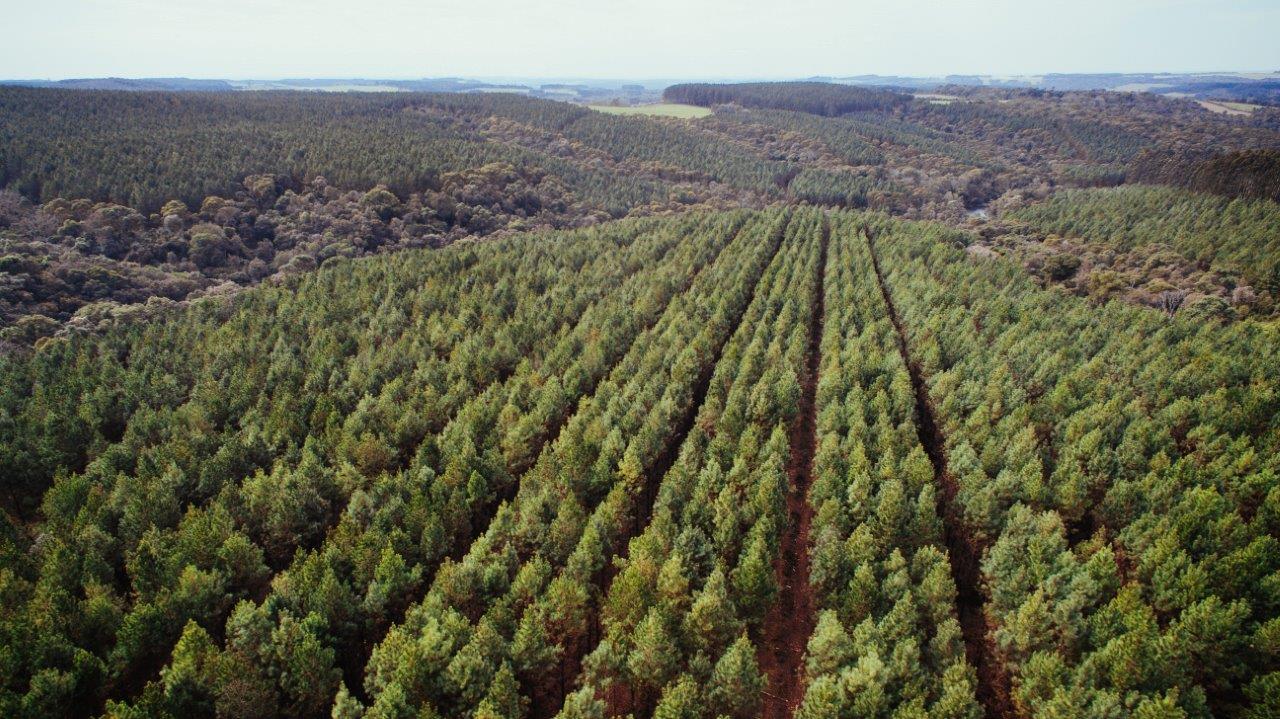 Fotos Timber Rio Negrinho44
