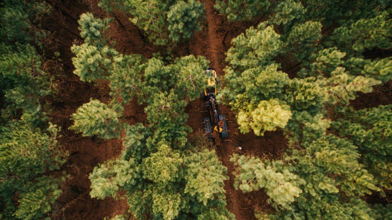Fotos-Timber-Rio-Negrinho31