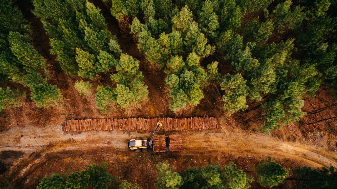 Fotos-Timber-Rio-Negrinho36